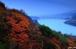桃園紅葉,石門水庫