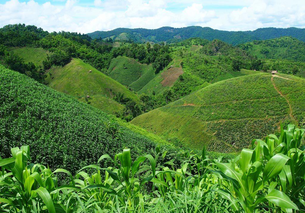 泰國美斯樂咖啡村