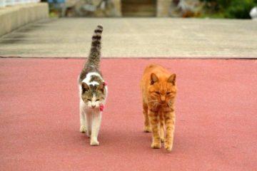 走進日本貓島,香川