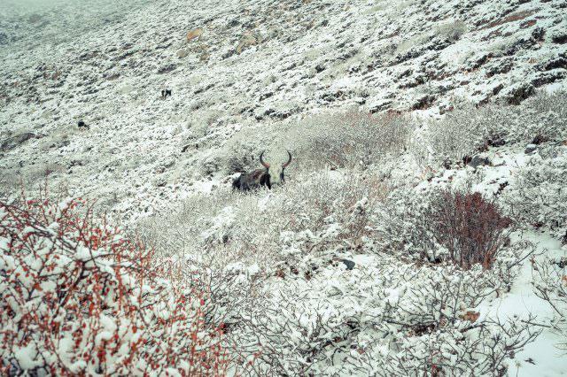 尼泊爾雪山