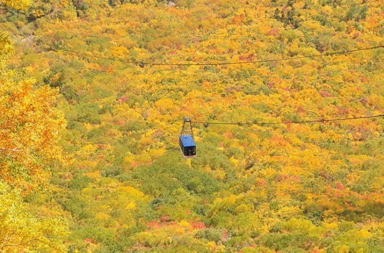 立山ロープウェイの紅葉_(2)